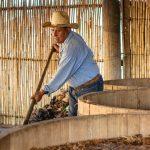 Fermentación de mezcal artesanal Jarabe de Pico Oaxaca